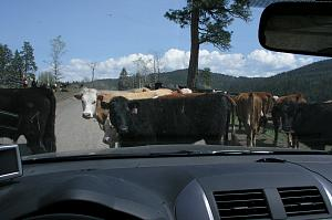Cattle road.jpg