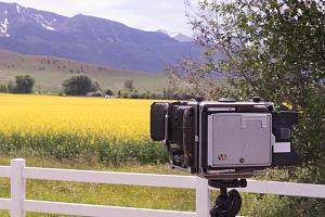 photographing_canola.jpg