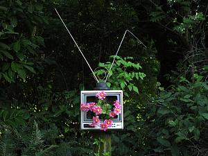 TV Planter.jpg